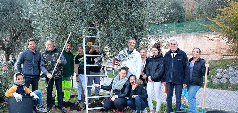 Oliviers : De l'huile d'olive pour financer un séjour !